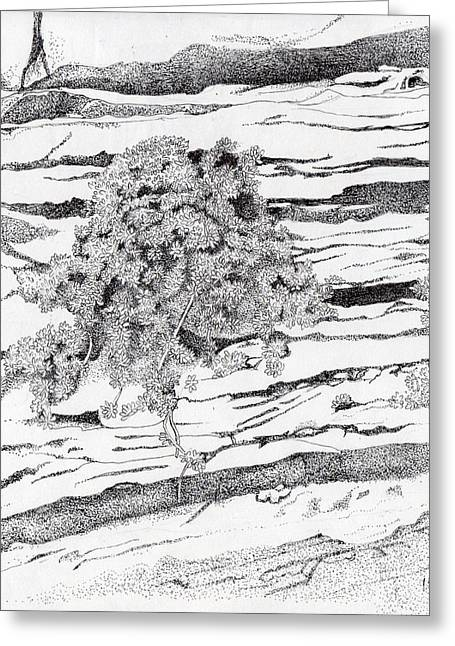 Shrub In Sedimentary Rock Greeting Card by Inger Hutton