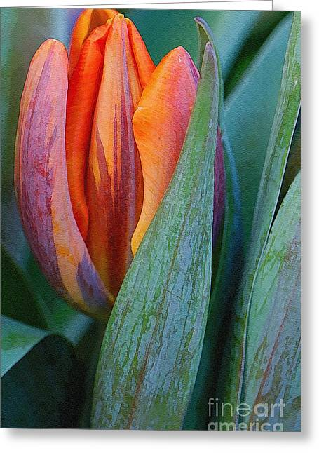 Shy Tulip Greeting Card