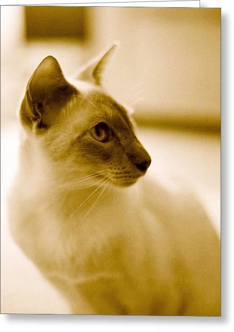 Siamese Feline Greeting Card