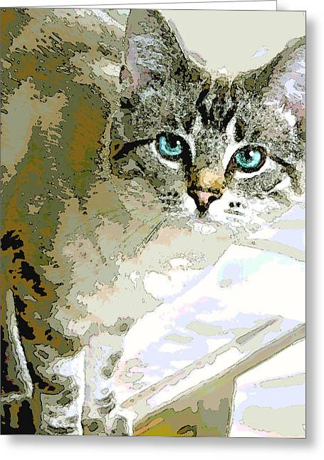 Siamese Mix Kitten Greeting Card by Dorothy Walker