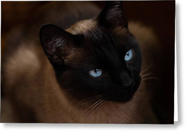 Siamese Greeting Card by Tim Reaves
