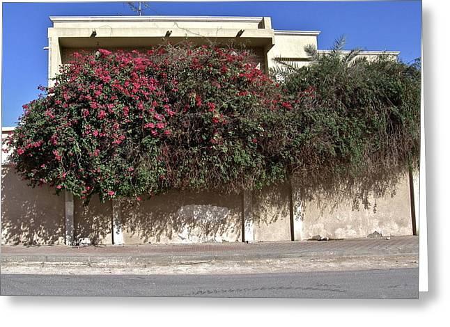 Sidewalk Florae In Doha Greeting Card by David Ritsema