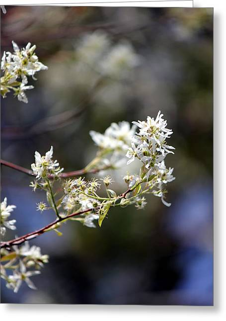 Signs Of Spring Greeting Card by Deborah Hughes