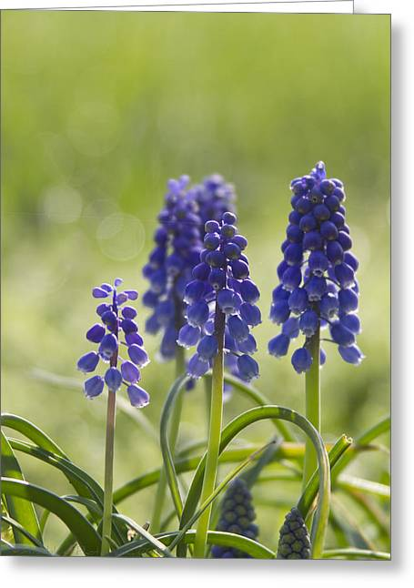 Signs Of Spring Greeting Card by Straublund Photography