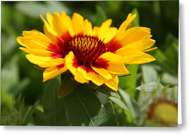 Greeting Card featuring the photograph Signs Of Summer by Robin Regan