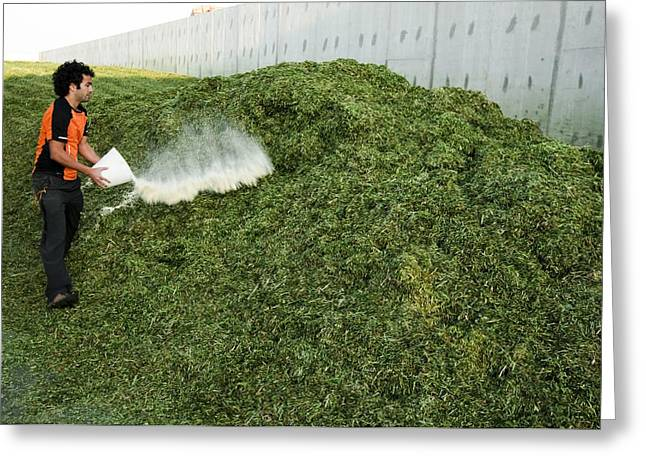 Silage Fermentation Greeting Card by Photostock-israel
