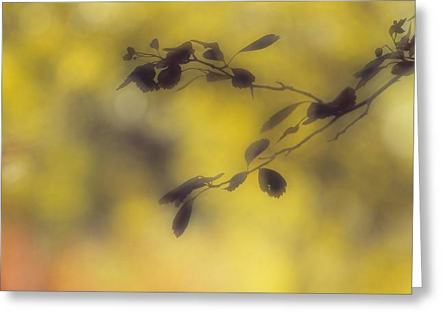 Silhouette Of Leaves, Cypress Hills Greeting Card by Darwin Wiggett