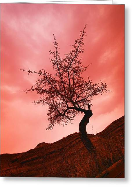 Silhouette Of Shrub Tree Greeting Card by Don Hammond