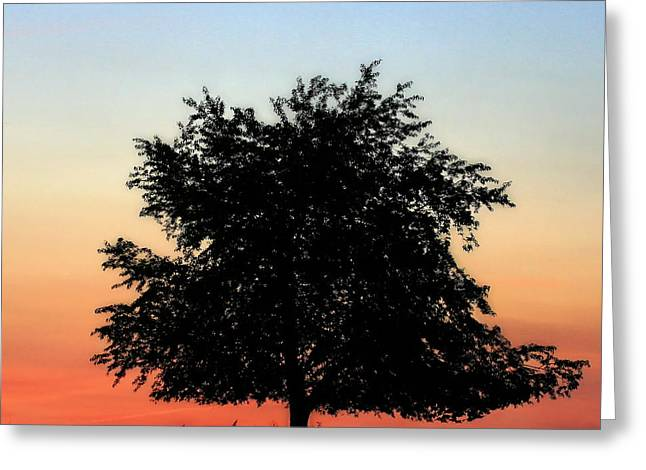 Make People Happy  Square Photograph Of Tree Silhouette Against A Colorful Summer Sky Greeting Card