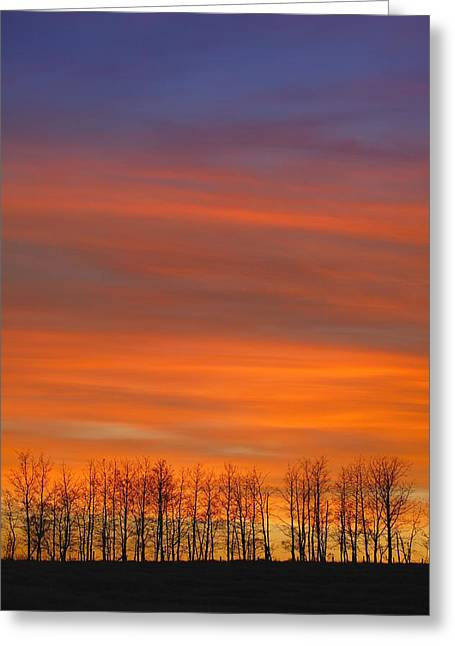 Silhouette Of Trees Against Sunset Greeting Card