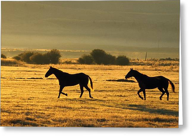Silhouetted Horses Running Greeting Card by Natural Selection Craig Tuttle
