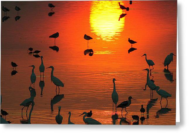 Silhouetted Wading Birds Feed Greeting Card by George Grall