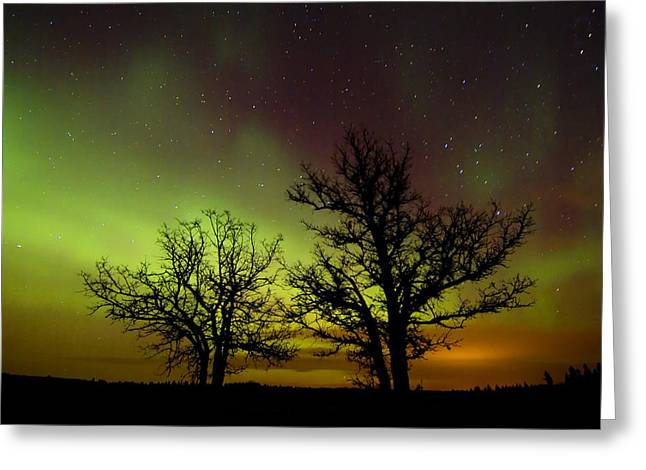Silhouettes Of Bur Oak Trees Greeting Card by Mike Grandmailson