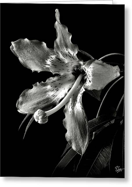 Silk Flower In Black And White Greeting Card