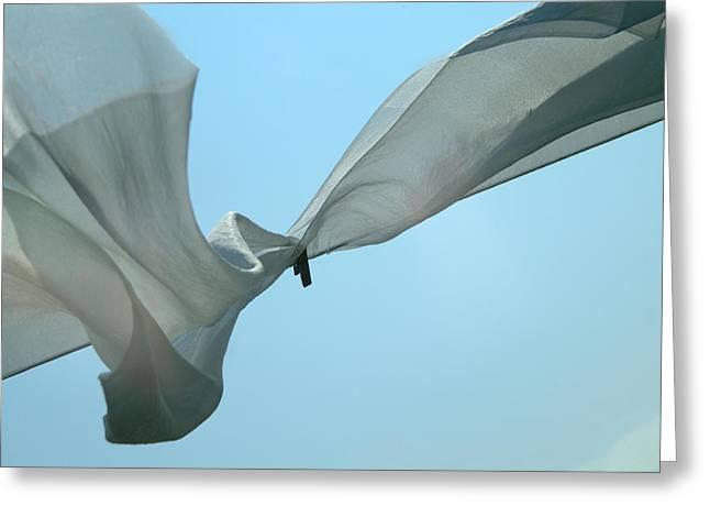 Silk Wings Greeting Card