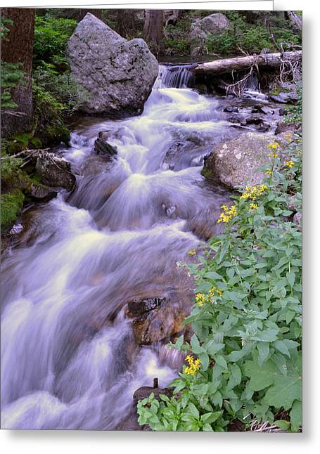 Silky Stream Greeting Card