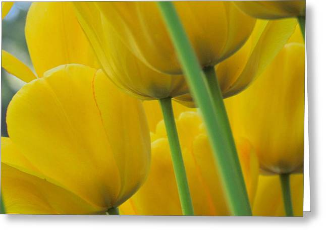 Silky Yellows Greeting Card