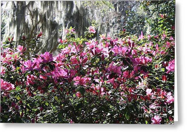 Silver And Pink In Savannah Greeting Card by Carol Groenen