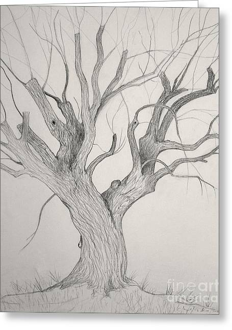 Silver Maple Greeting Card by Jackie Irwin