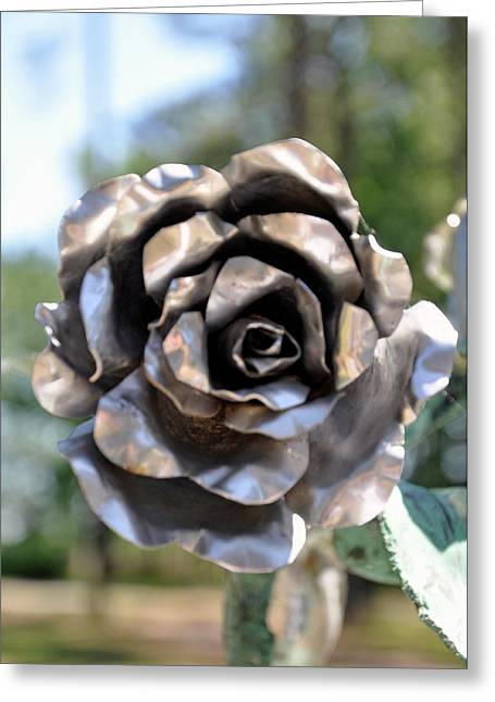 Greeting Card featuring the photograph Silver Rose by Helen Haw