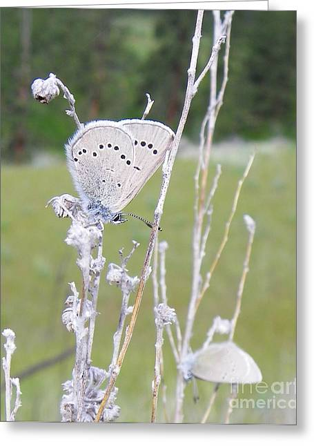 Silver Side Of Blue Greeting Card