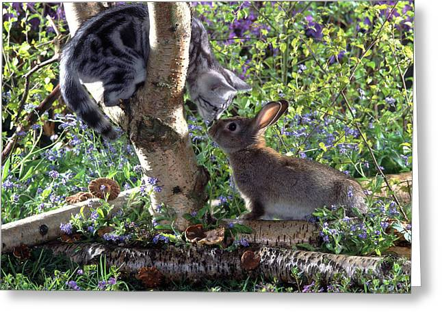 Silver Tabby And Wild Rabbit Greeting Card by Jane Burton