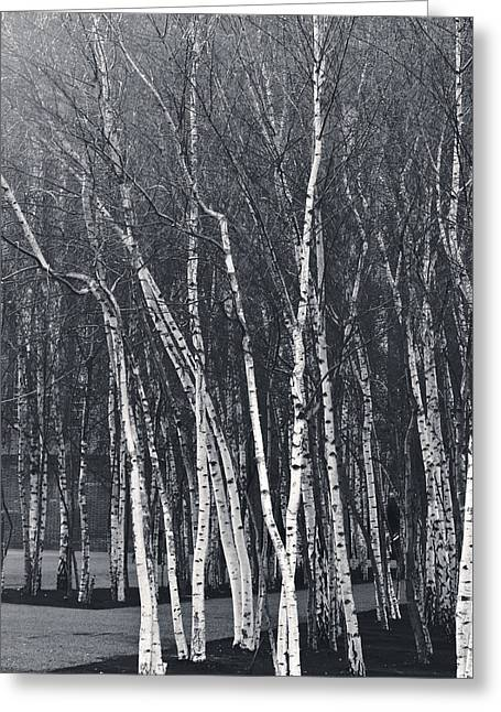 Silver Trees Greeting Card by Lenny Carter