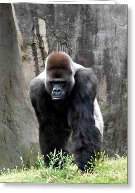 Greeting Card featuring the photograph Silverback by Jo Sheehan