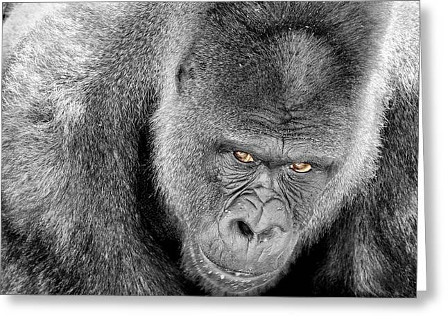 Silverback Staredown Greeting Card