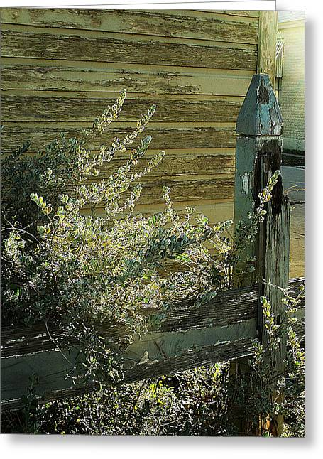 Greeting Card featuring the photograph Silverleaf In Morning Sun by Louis Nugent
