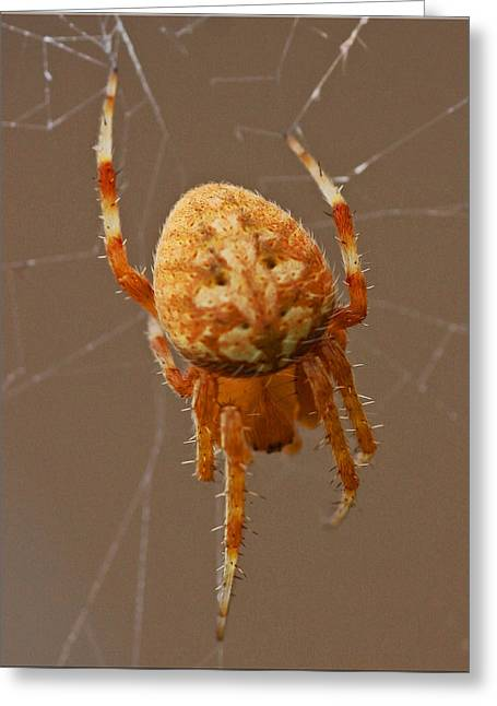 Simba The Spider Greeting Card by Chet King