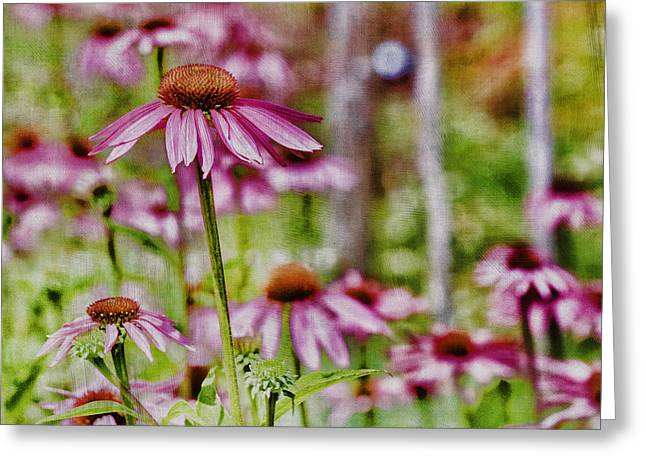 Simple Beauty Greeting Card by Bonnie Bruno