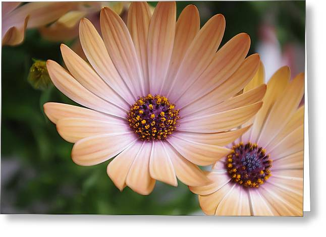 Simple Beauty Greeting Card by Michael Krahl