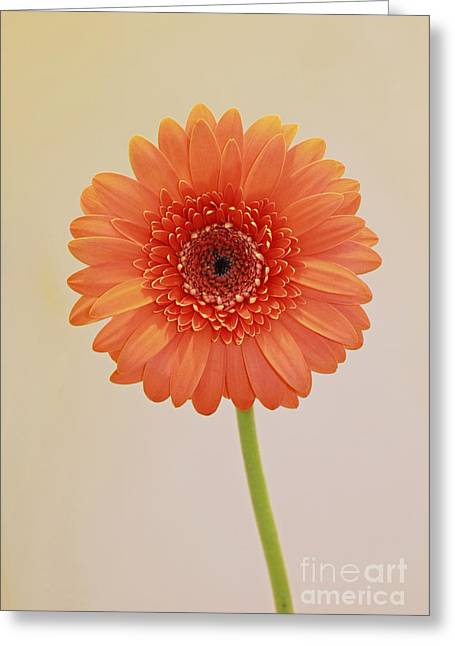 Simple Pleasures Greeting Card by Inspired Nature Photography Fine Art Photography