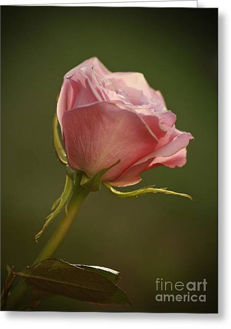 Simple Pleasures- Pink Rose Bud Greeting Card by Inspired Nature Photography Fine Art Photography