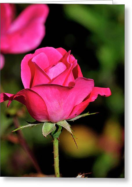 Simple Red Rose Greeting Card