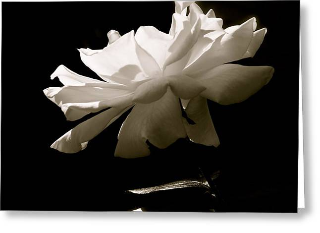 Simplistic Beauty In The Morning Greeting Card by Gloria Warren
