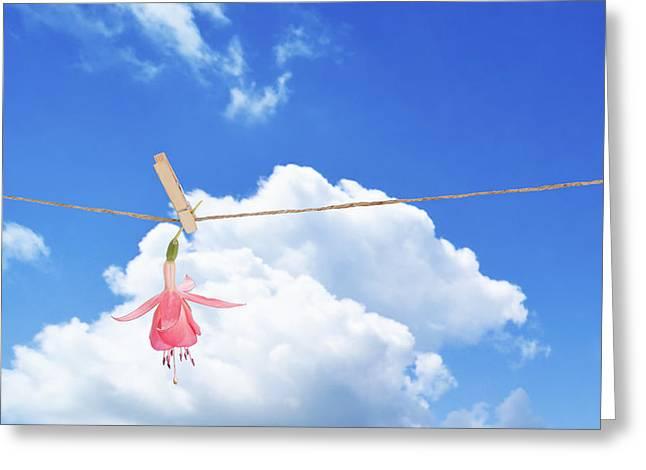 Single Fuchsia Head Greeting Card by Amanda Elwell