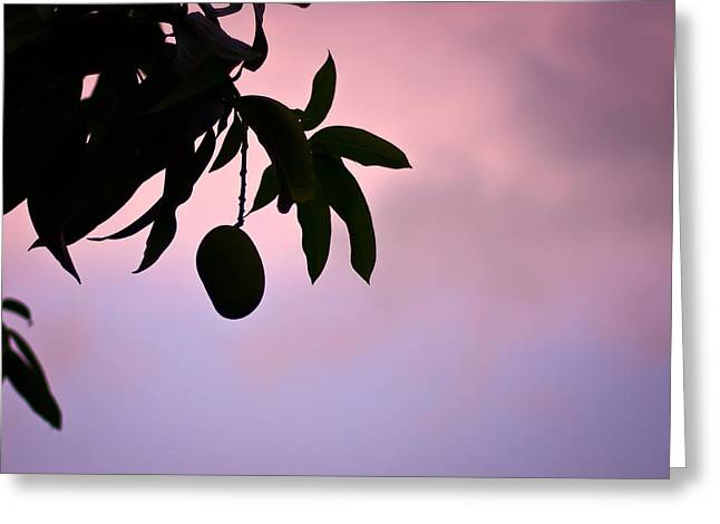 Single Mango On A Tree At Twilight Greeting Card by Anya Brewley schultheiss