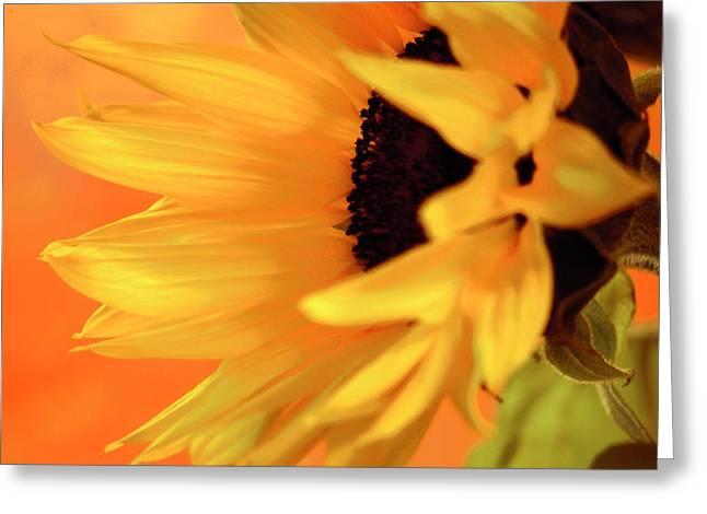 Single Sunflower Greeting Card by James Bethanis