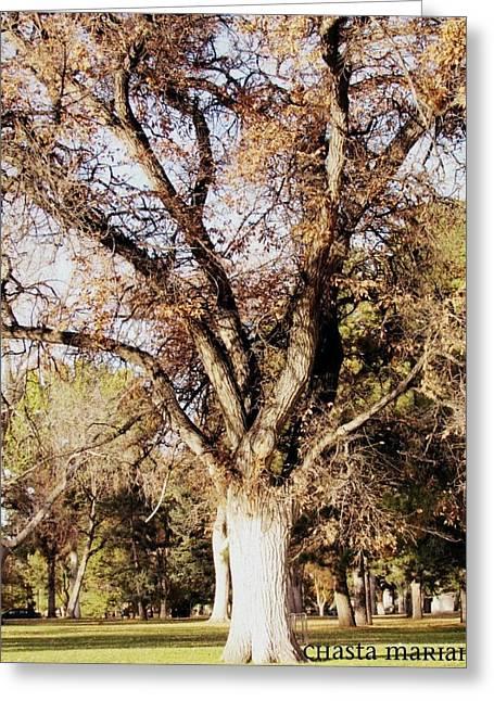 Single Tree Greeting Card by Chasta Mariah