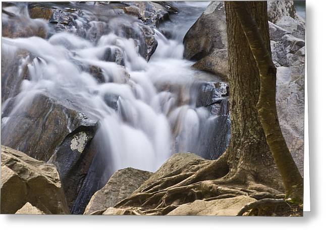 Sinks Cascade And Tree Greeting Card
