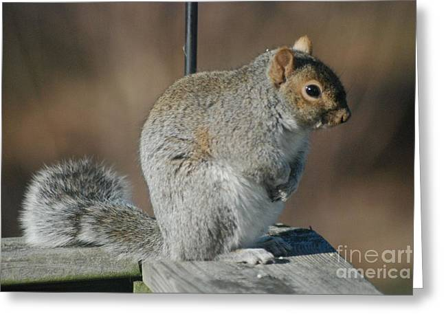 Greeting Card featuring the photograph Sittin Pretty by Mark McReynolds