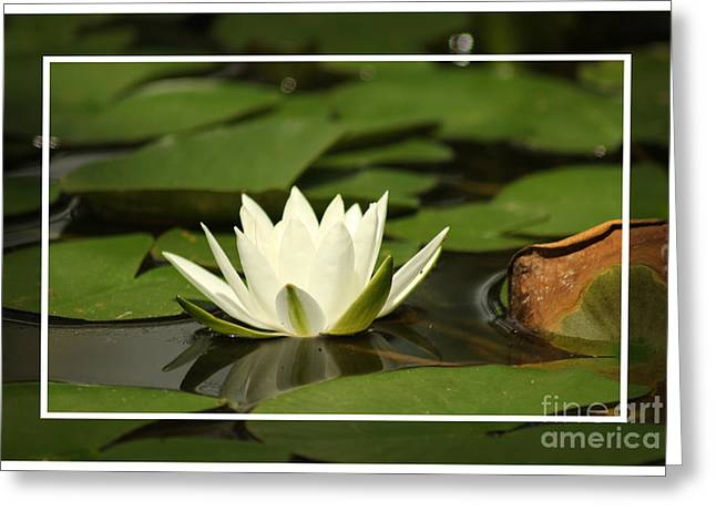 Greeting Card featuring the photograph Sitting Pretty by Lori Mellen-Pagliaro