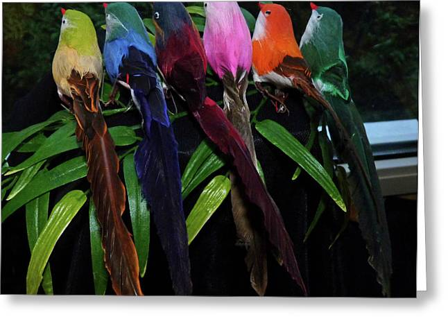 Six Long-tailed Colorful Birds On A Bamboo Leaf Greeting Card