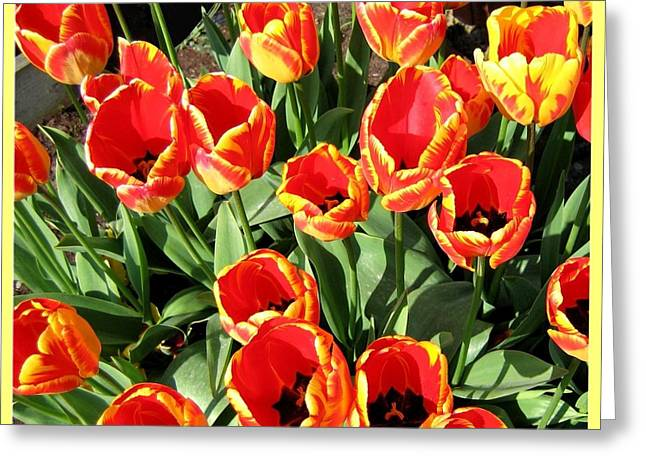 Skagit Valley Tulips 10 Greeting Card by Will Borden