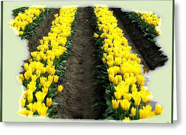Skagit Valley Tulips 2 Greeting Card by Will Borden