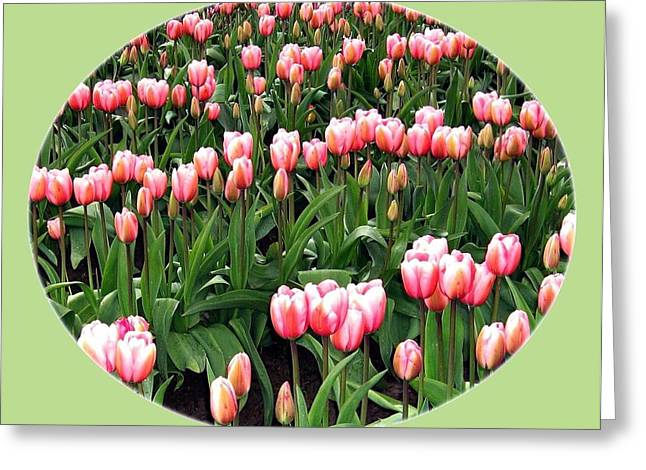 Skagit Valley Tulips 3 Greeting Card by Will Borden