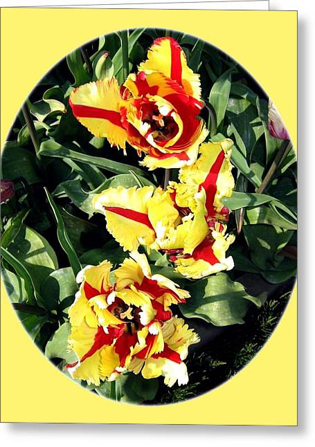Skagit Valley Tulips 4 Greeting Card by Will Borden