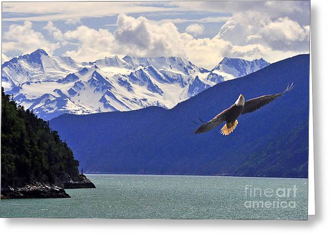 Greeting Card featuring the photograph Skagway Bald Eagle by Jack Moskovita